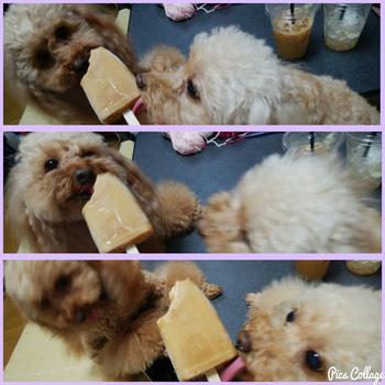 アイスに食付く!