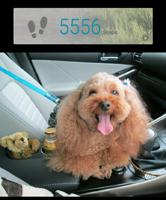 901 5556歩