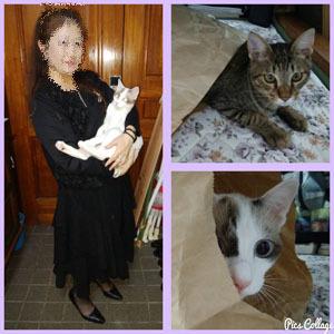 908 実家猫と コラ