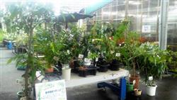 熱帯果樹コーナー_R