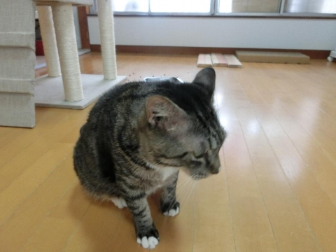 20170812-保護猫カフェ-303