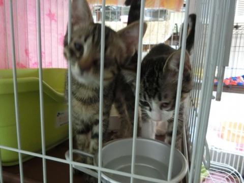 20170812-保護猫カフェ-402