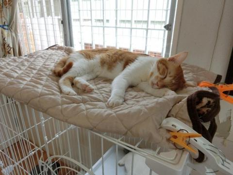 20170812-保護猫カフェ-409