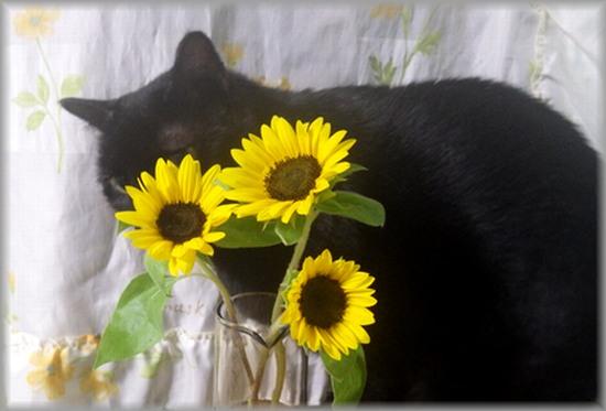 花を愛でる猫