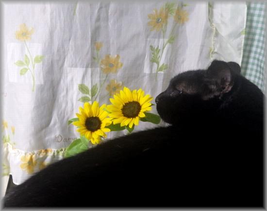 花を愛でる猫③