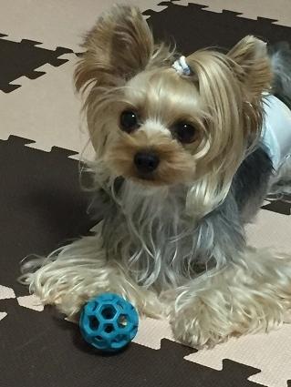青いボール