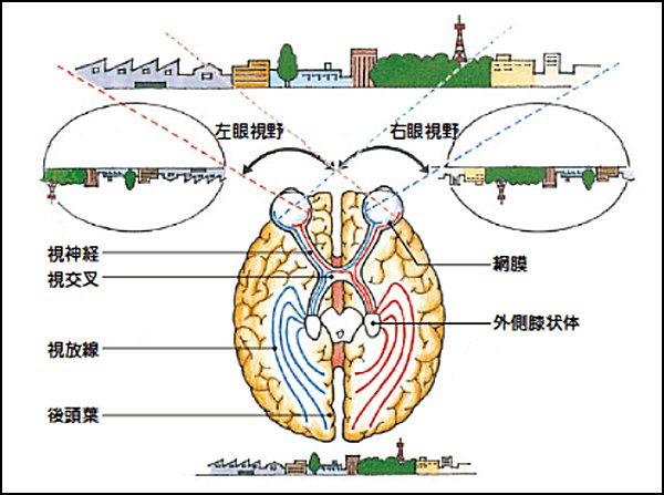 脳の画像認識