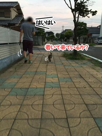 S_6406693188232.jpg
