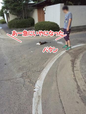 S_6406693303175.jpg