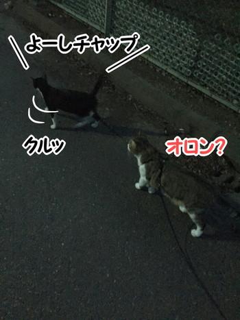 S_6406693680946.jpg