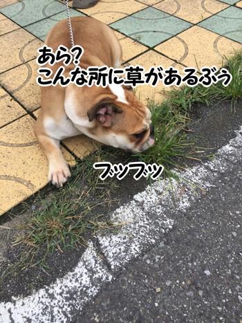 S_6467322872454.jpg
