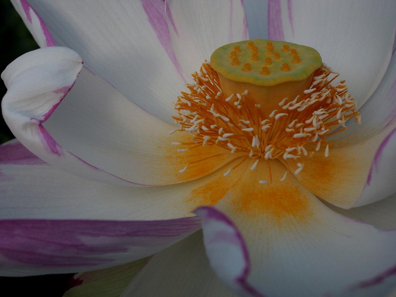 20170825-Lotus_Ittenshikai-O06.jpg
