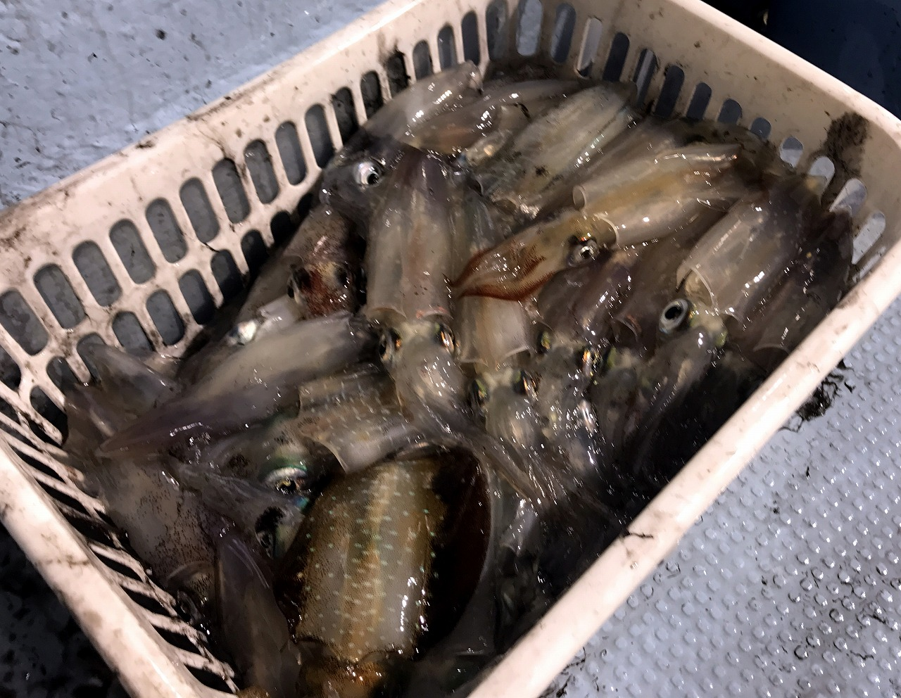 20170909-Ikametal_Fishing-I06.jpg