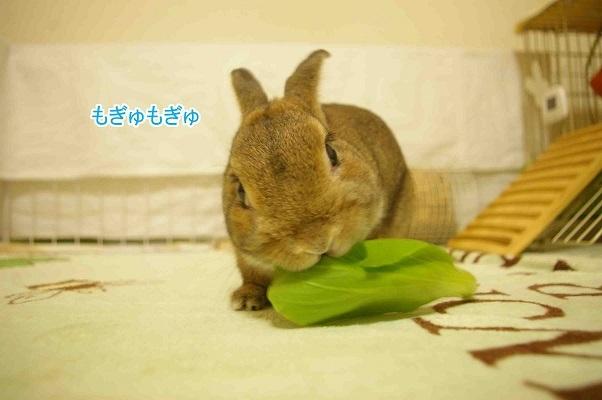 02青梗菜がスキー