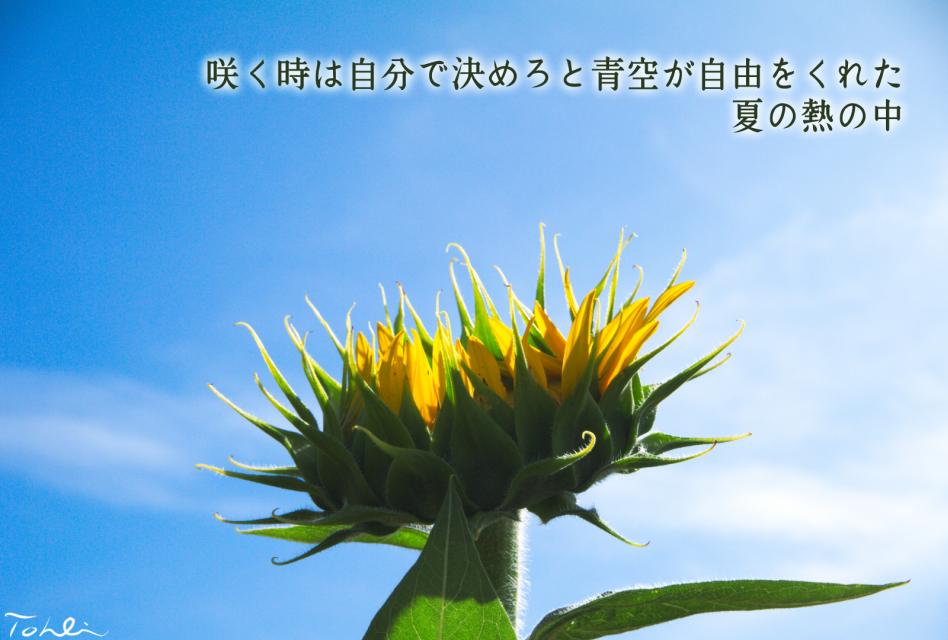 20170809112413134.jpg