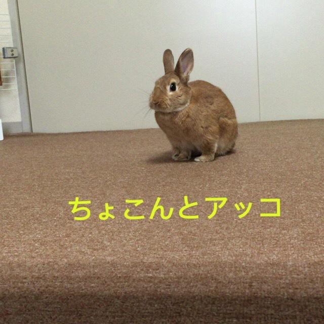 image1 (21)