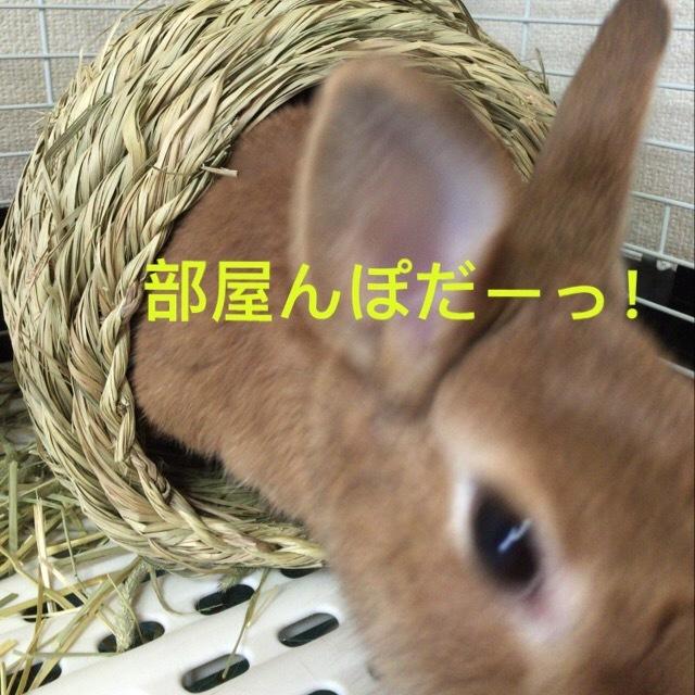 image4 (14)