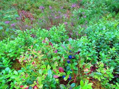 紫の花とブルーベリー