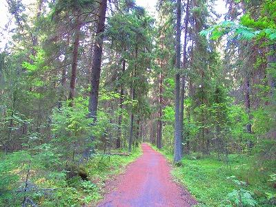 森の小道1