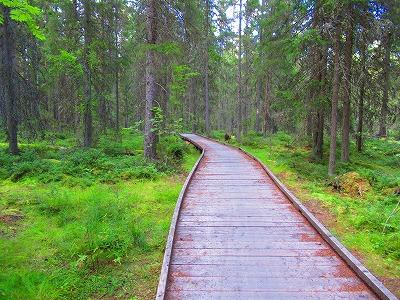 森の小道2