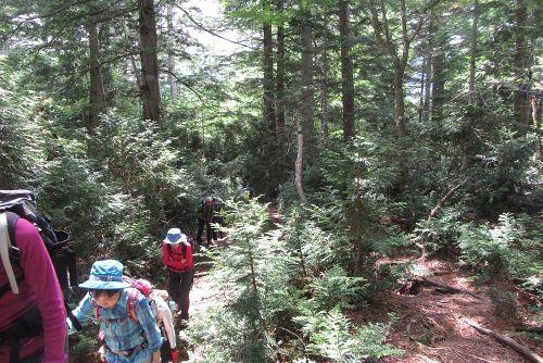 アスナロの森