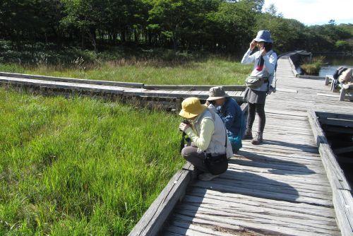 湿原の植物を観察