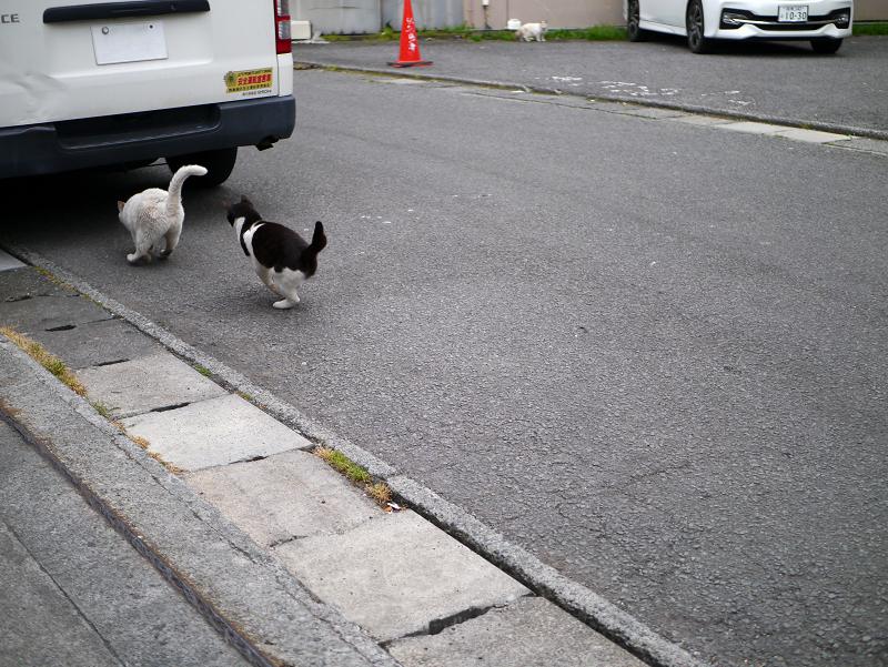 白猫を追いかける黒白猫2