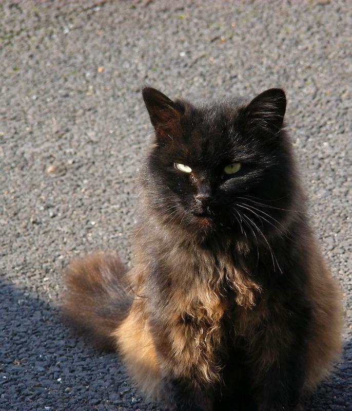 駐車場の毛長の黒猫3