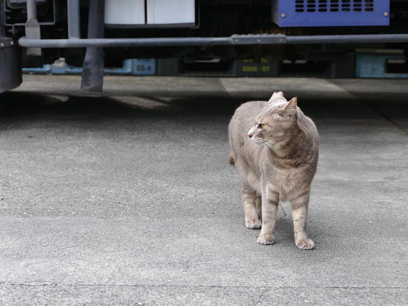 イケメン風な猫1