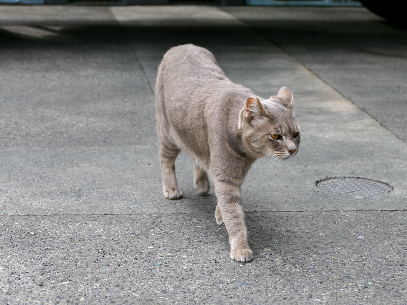 イケメン風な猫2
