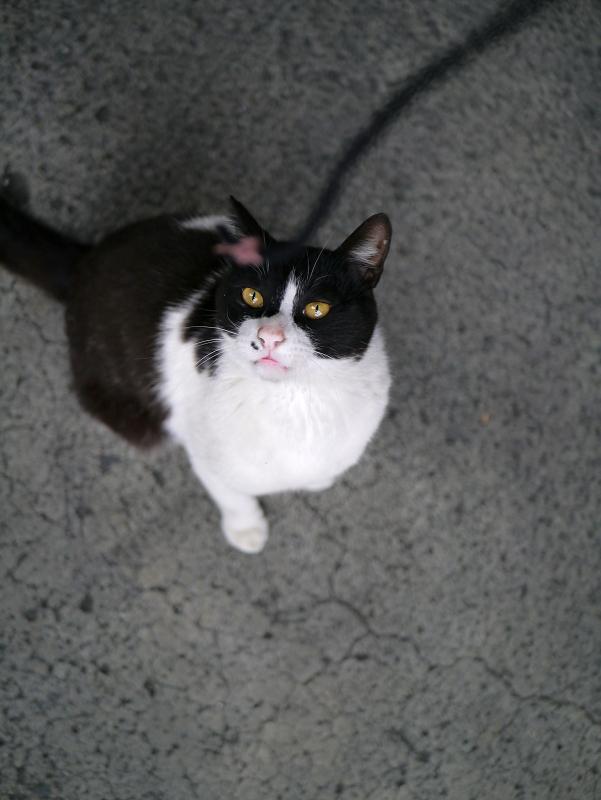 ブラブラゴム紐と黒白猫3