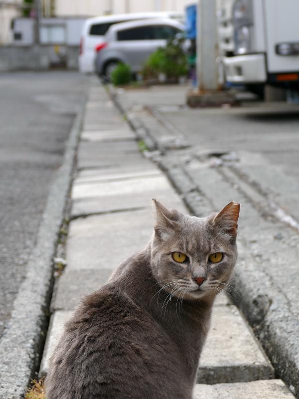イケメン風な猫3