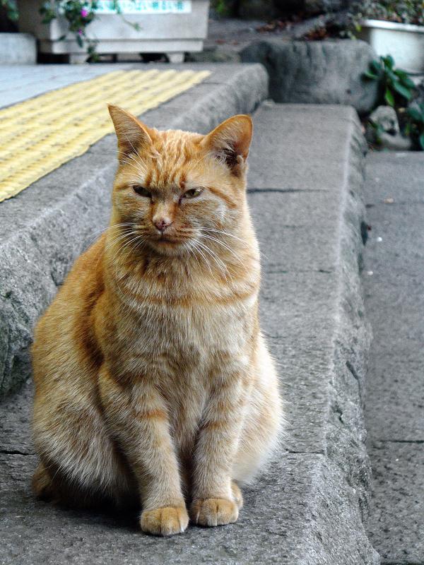 石階段と茶トラ猫1