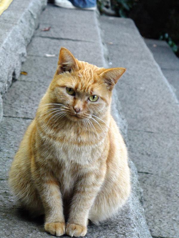石階段と茶トラ猫2