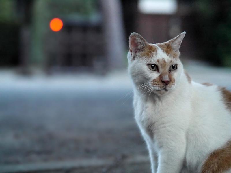 夕暮れの大寺の境内と猫1