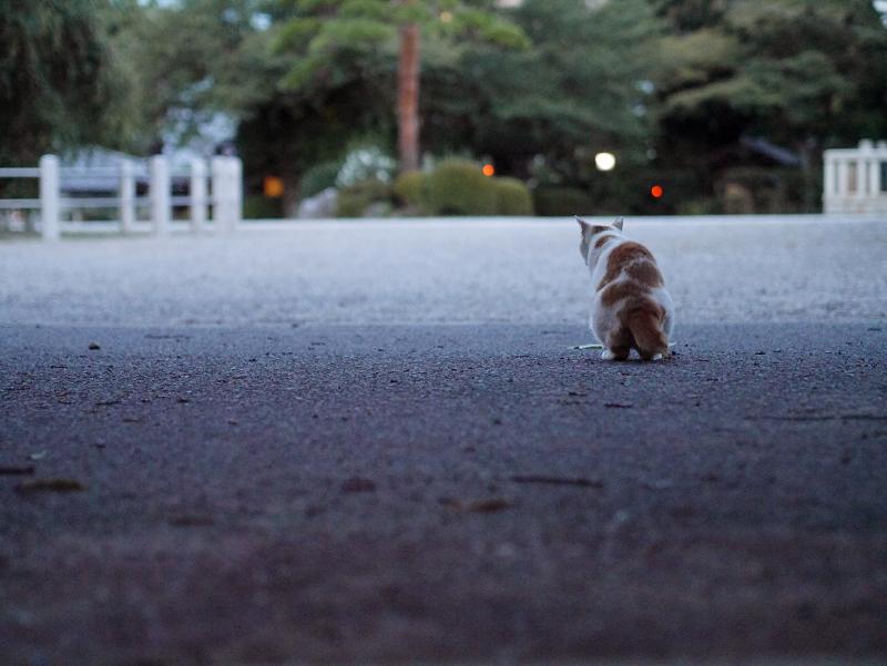 夕暮れの大寺の境内と猫2