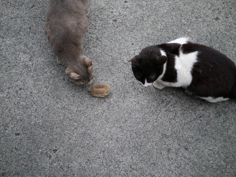 タワシを間に置いた猫たち1