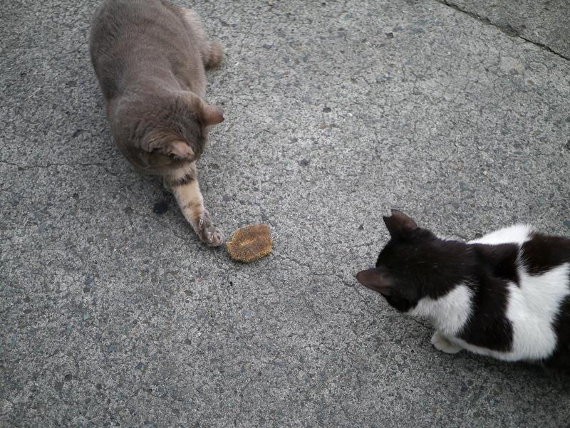 タワシを間に置いた猫たち5