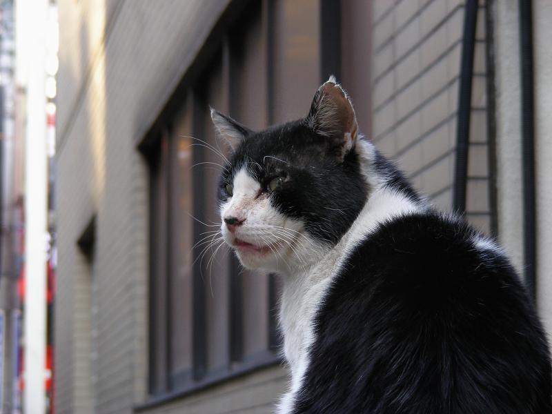 ブロック塀の黒白猫の顔柄2