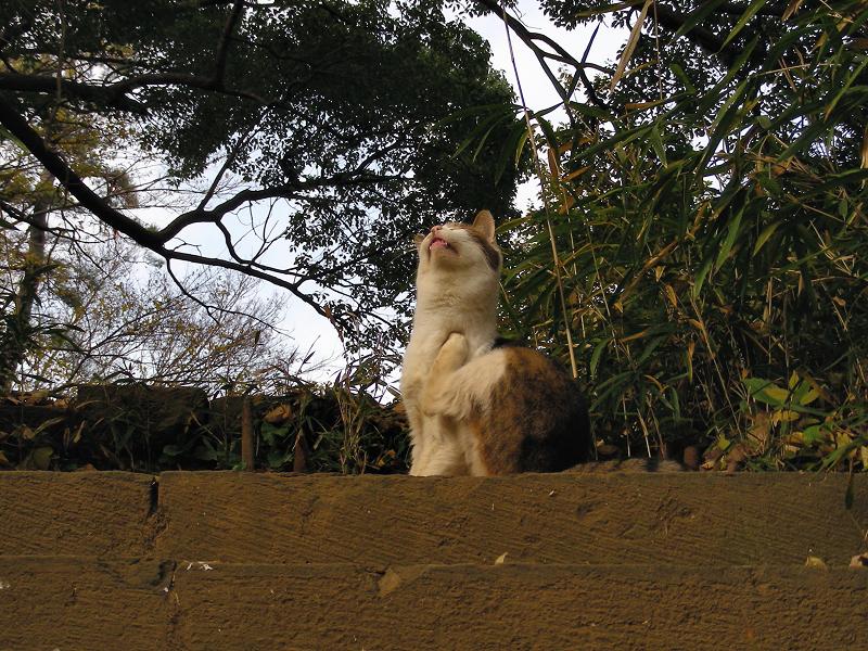 木の階段とキジ白猫2