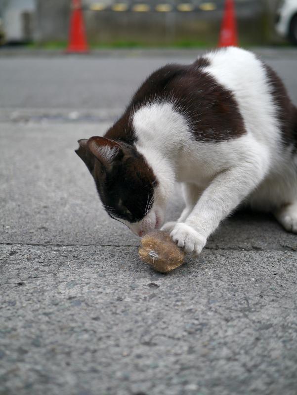 タワシにパンチする黒白猫4