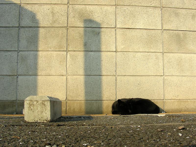 夕陽とブロック塀と黒猫1