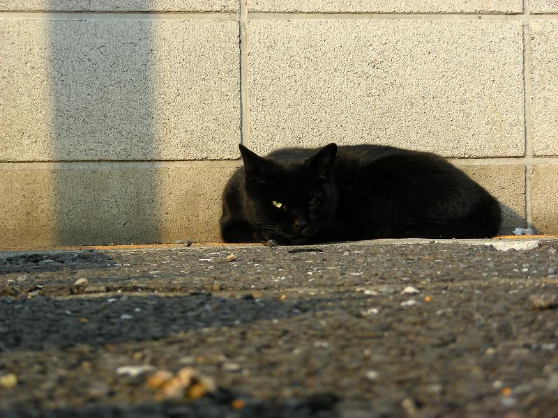 夕陽とブロック塀と黒猫2