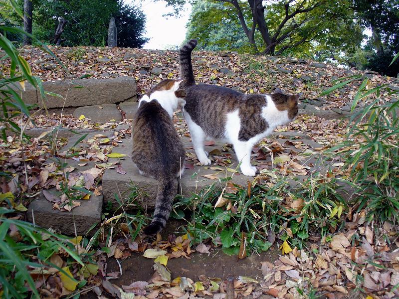 階段の先のキジ白猫2