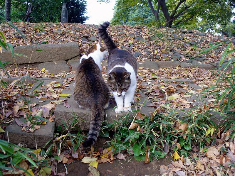 階段の先のキジ白猫3