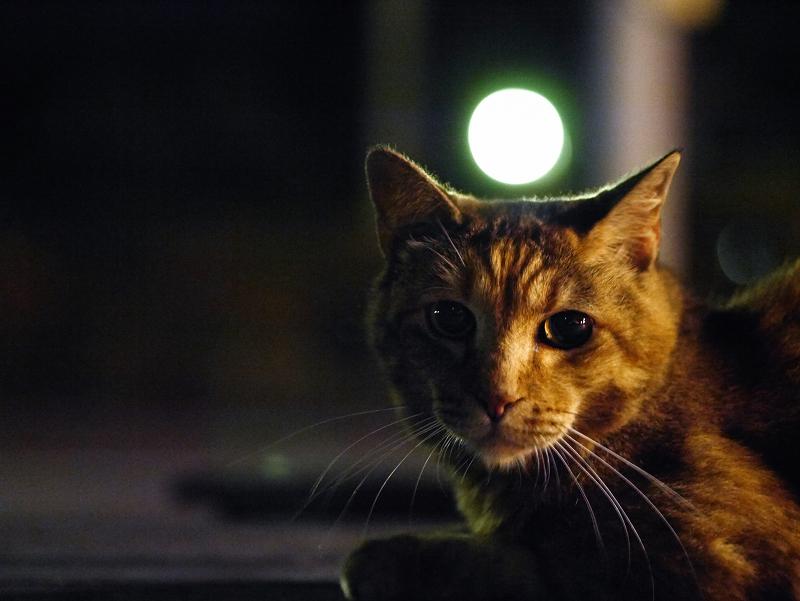 夕暮れの境内ベンチとサビ柄猫1
