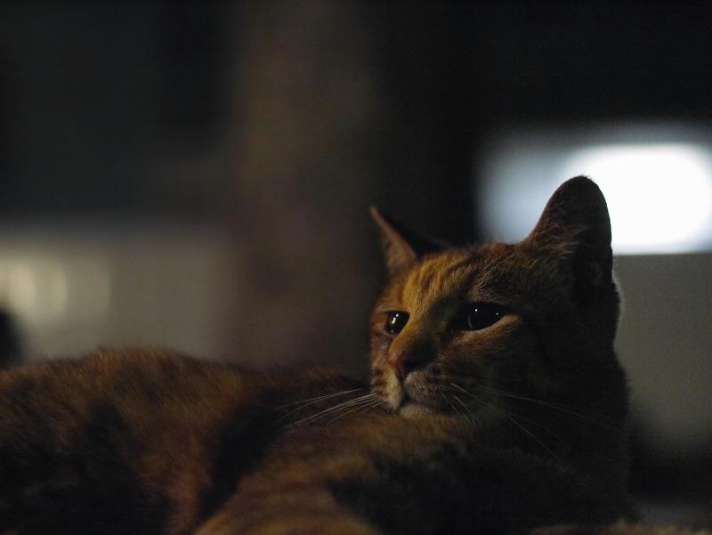 夕暮れの境内ベンチとサビ柄猫2