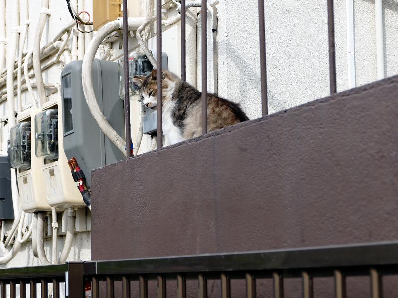 踊り場の毛長三毛風な猫1