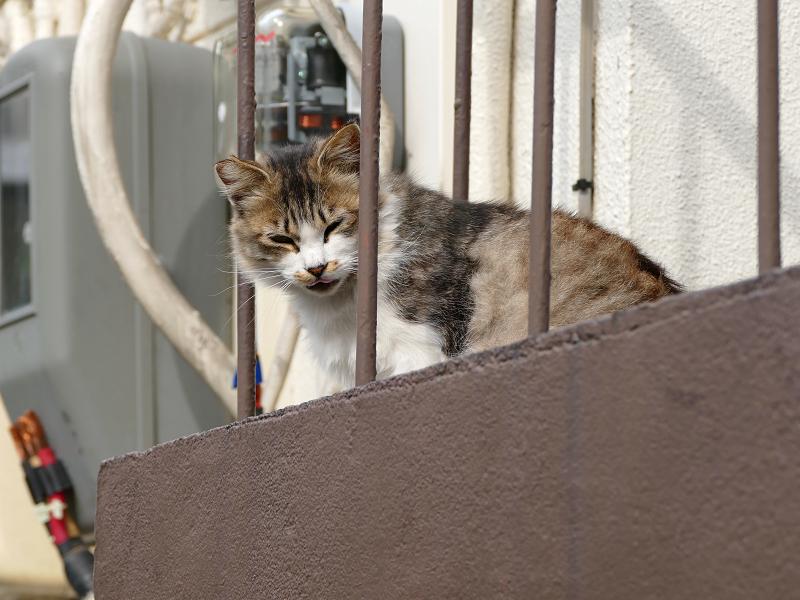 踊り場の毛長三毛風な猫3