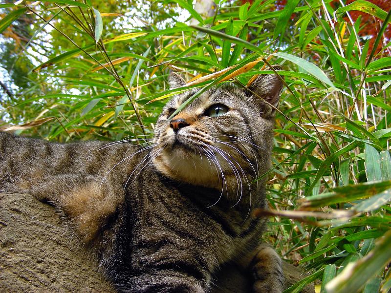 古い階段とキジトラ猫2